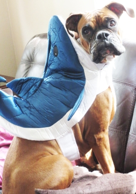 mia shark