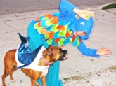 shark attack! halloween 2012