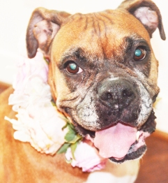 i'm the prettiest flower girl you've ever seen. right?!
