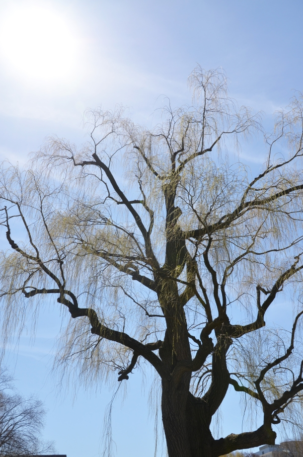 BC tree